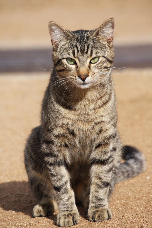 Download What's up cat? stock image. Image of tabby, green, sitting - 11988593