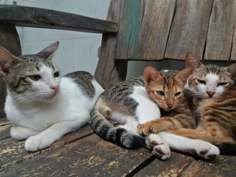 What should we do today?. The trio cats thinking hard if they should eat, sleep, or play royalty free stock photography