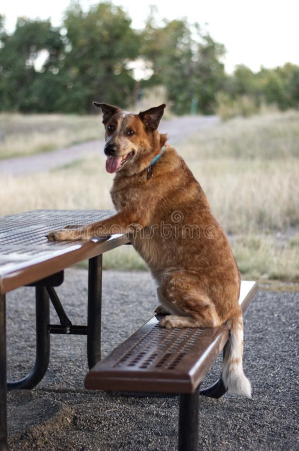 Whats for lunch? stock image