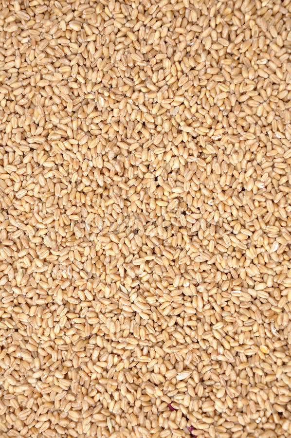 Download Wheat stock image. Image of falling, crop, industry, wheat - 13909811