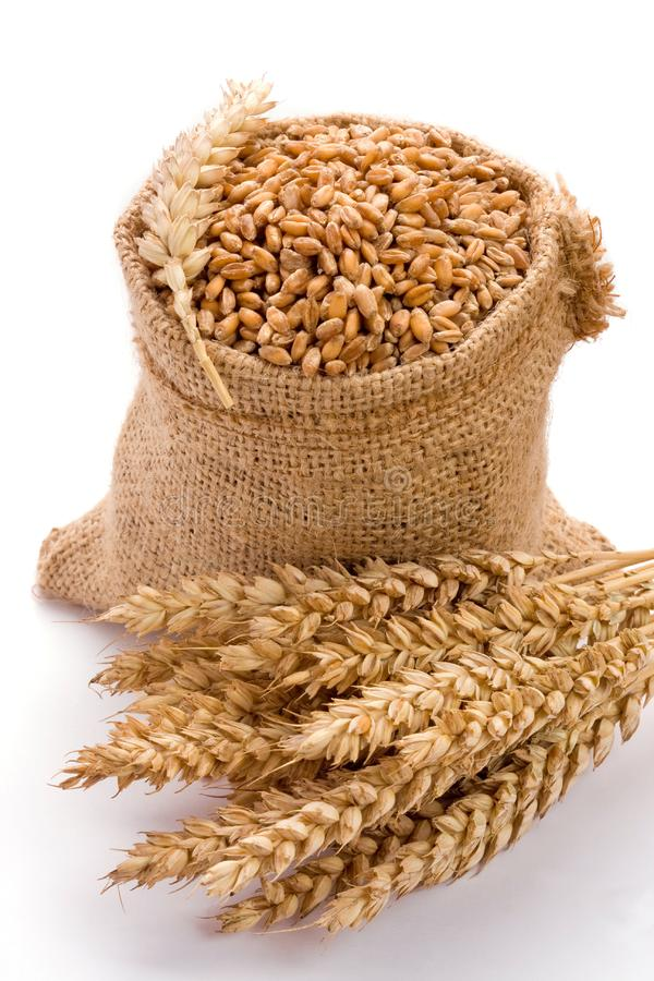 Download Wheat stock photo. Image of ripe, golden, color, harvest - 16831926