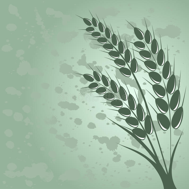 Download Wheat stock vector. Illustration of harvest, green, summer - 25533255