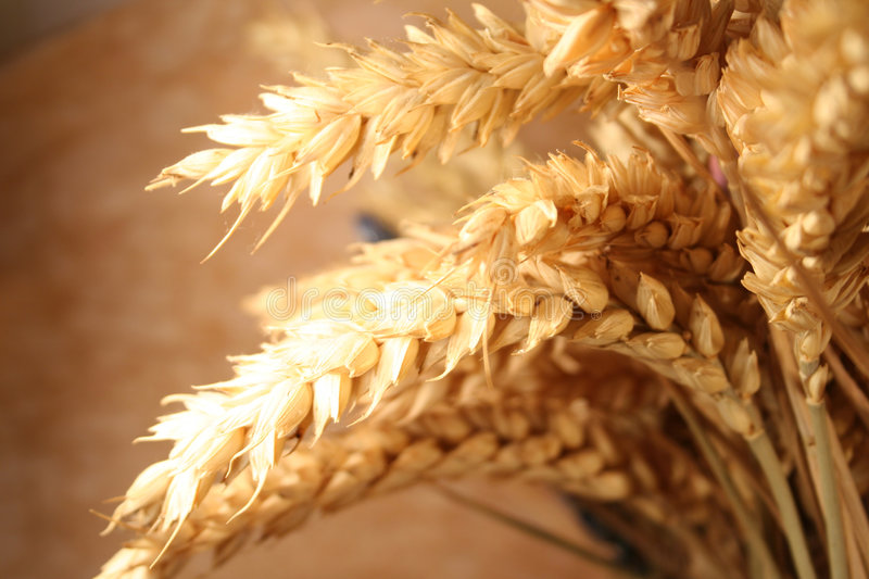 Wheat. In the blade