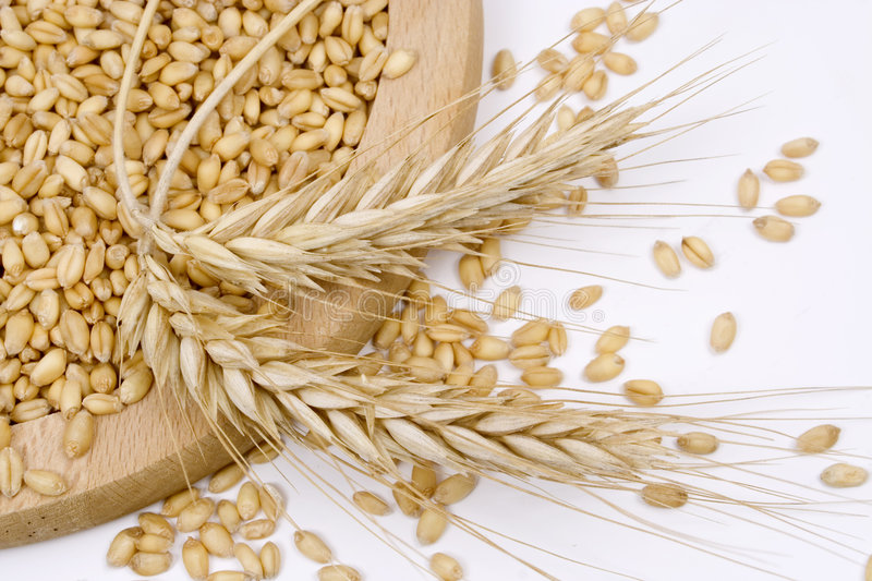 Download Wheat stock image. Image of golden, food, wheat, white - 5960459