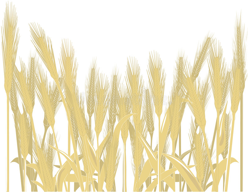 Download Wheat stock vector. Image of isolated, flour, design, color - 6731452