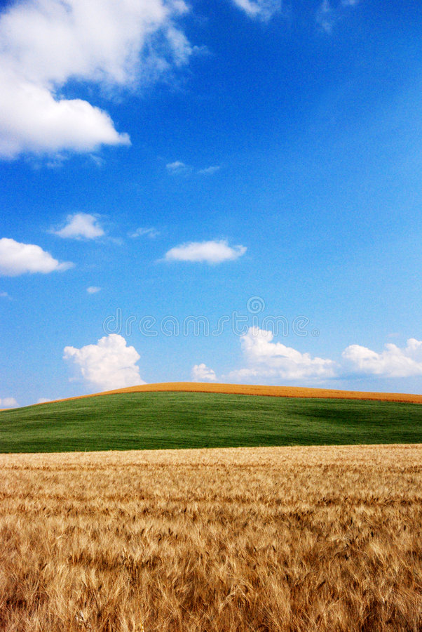 Free Wheat And Oat Fields Stock Images - 2743664