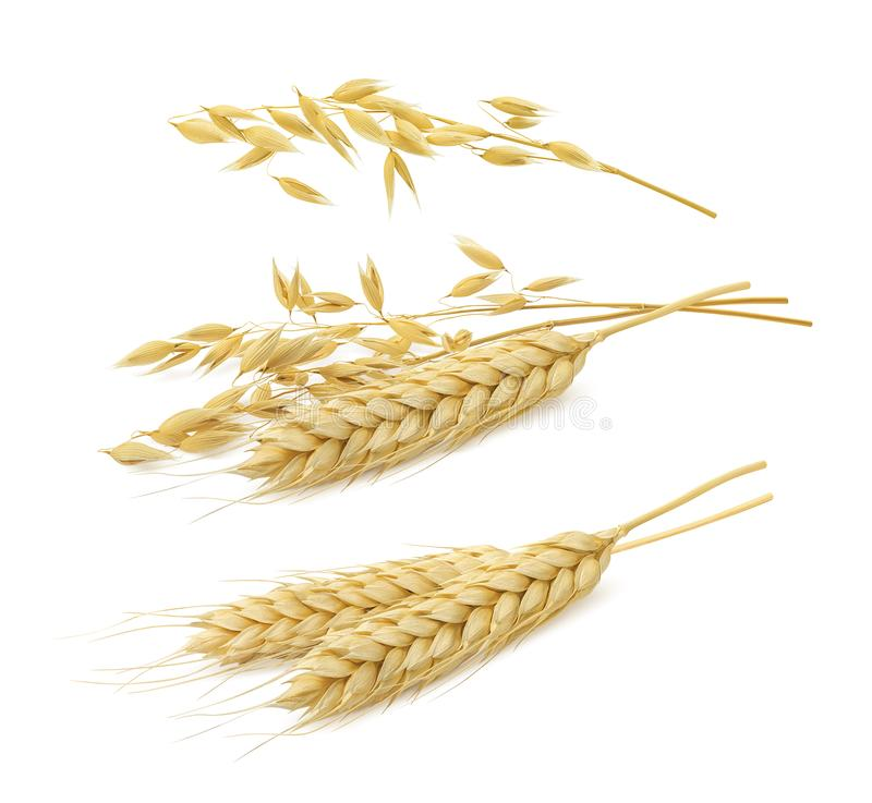 Free Wheat And Oat Set Isolated On White Background Royalty Free Stock Photo - 116077985
