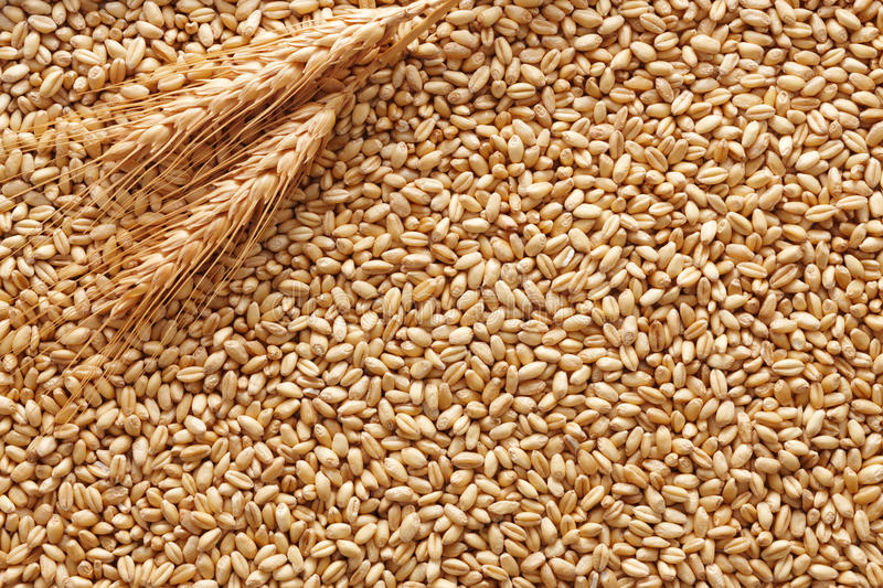 Download Wheat background stock image. Image of grain, kernel - 26152781