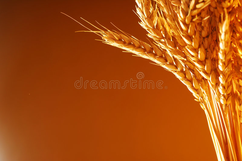 Wheat Background Framing Royalty Free Stock Images