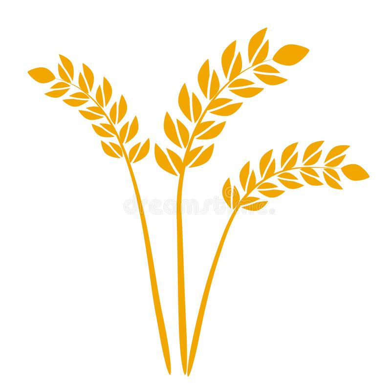 Wheat or barley ears. Harvest wheat grain, growth rice stalk and whole bread grains or field cereal nutritious rye grained. Agriculture products ear symbol vector illustration