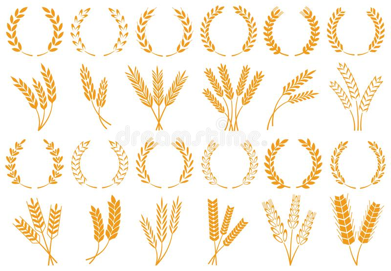 Wheat or barley ears. Harvest wheat grain, growth rice stalk and bread grains isolated vector set stock illustration