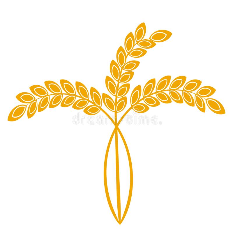 Wheat or barley ears. Harvest wheat grain, growth rice stalk and whole bread grains or field cereal nutritious rye grained. Agriculture products ear symbol royalty free illustration