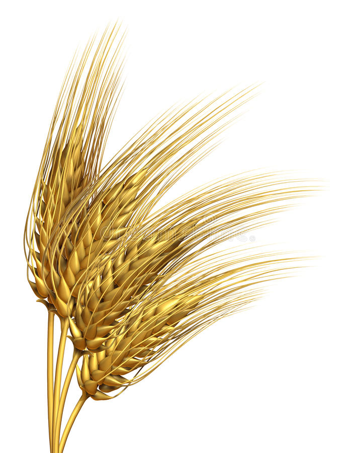 Download Wheat or barley Element stock illustration. Image of farm - 25375994