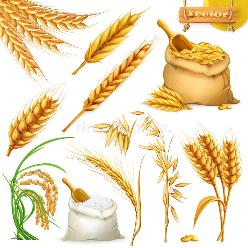 Wheat, barley, oat and rice. Cereals icon vector set royalty free illustration