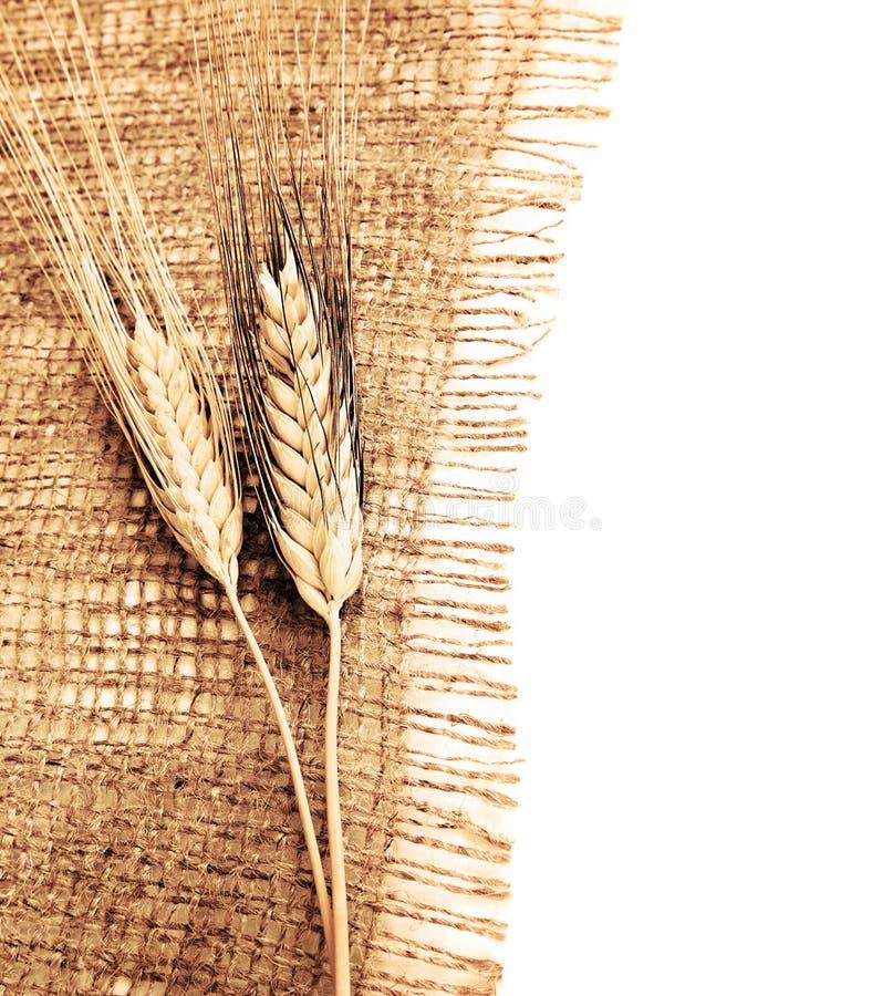 Wheat border royalty free stock image