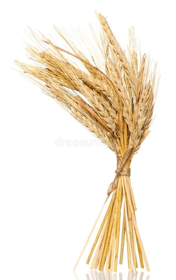 Wheat bunch stock photo