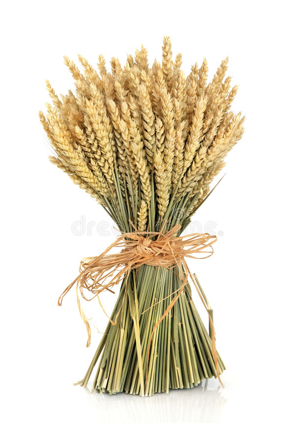 Wheat Bundle royalty free stock photo