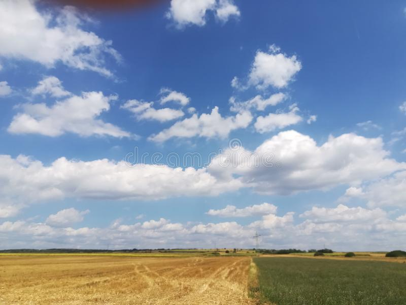 Wheat. Calme fields and sky royalty free stock photo