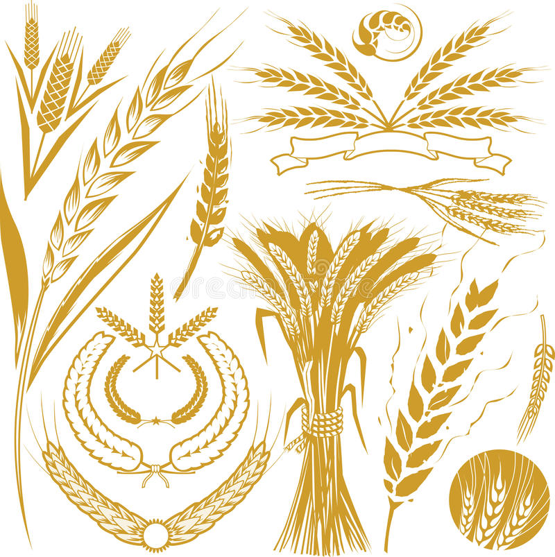 Free Wheat Collection Stock Photos - 20367333