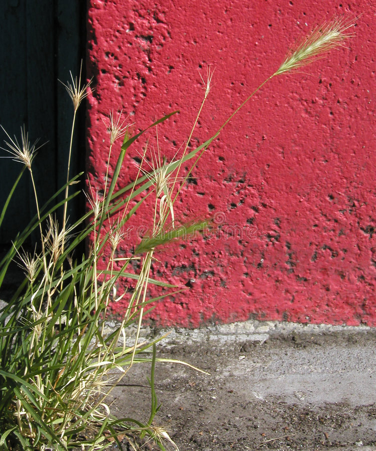 Download Wheat and Concrete stock photo. Image of wall, plant, wheat - 21716
