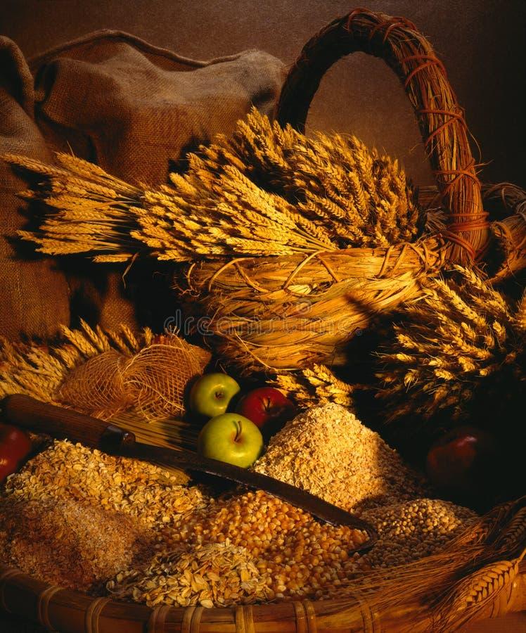 Wheat - Corn - Oats stock photo