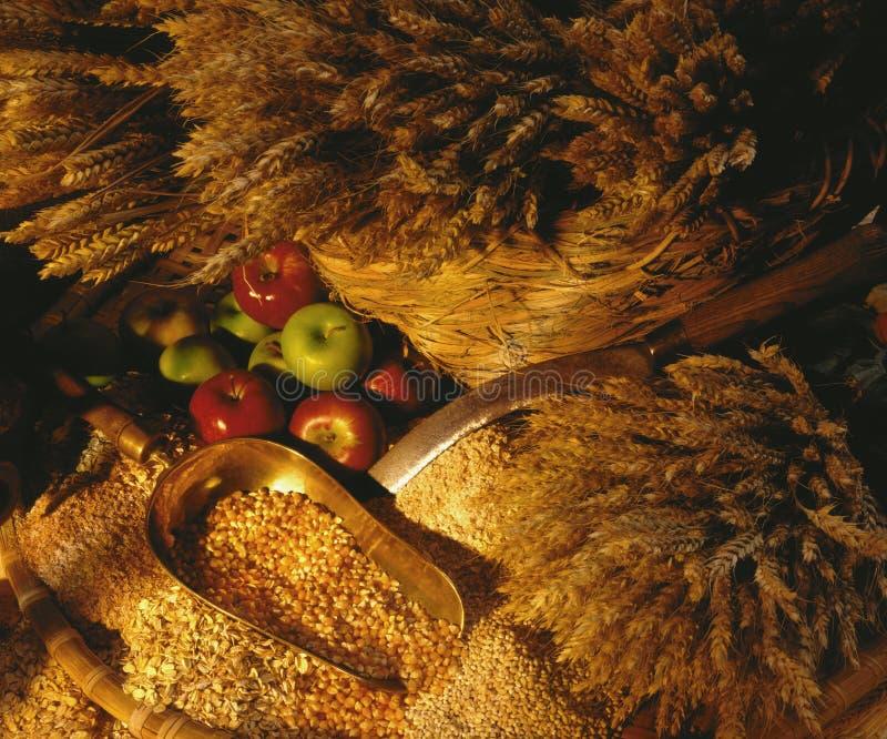Wheat - Corn - Oats stock image