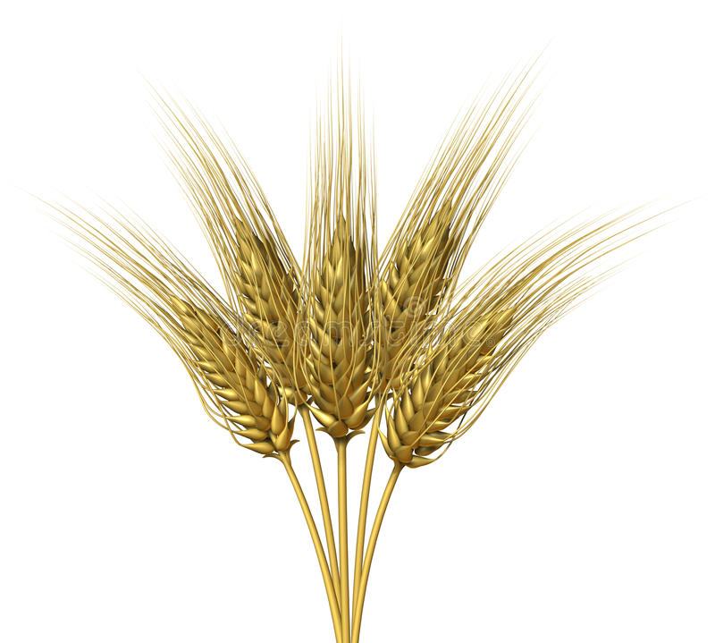 Wheat design stock illustration