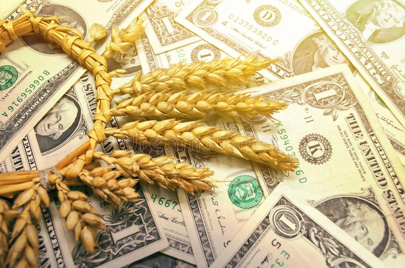 Wheat and dollar banknote in close up stock image
