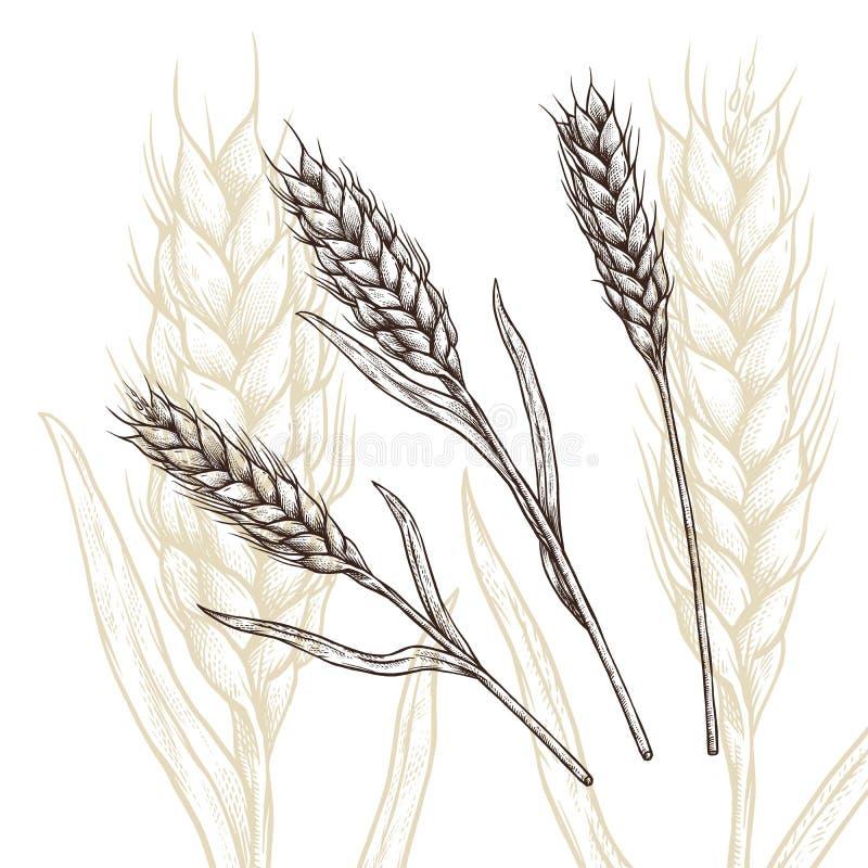 Wheat ear royalty free illustration