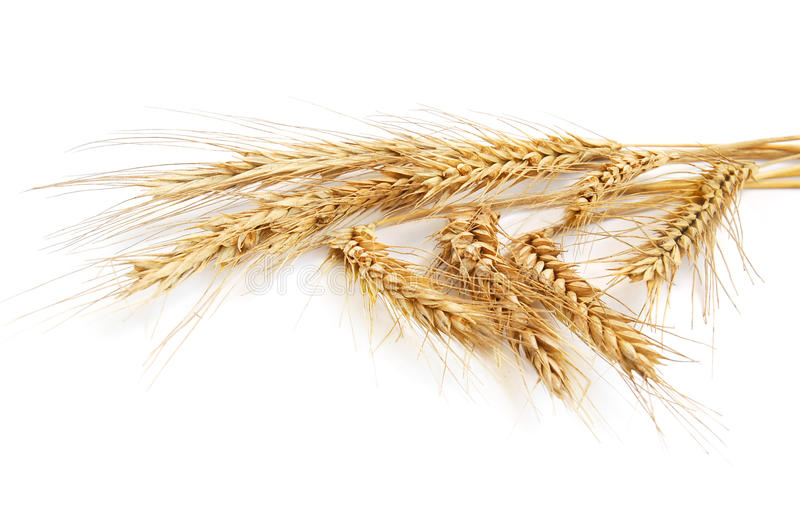 Wheat ears royalty free stock image