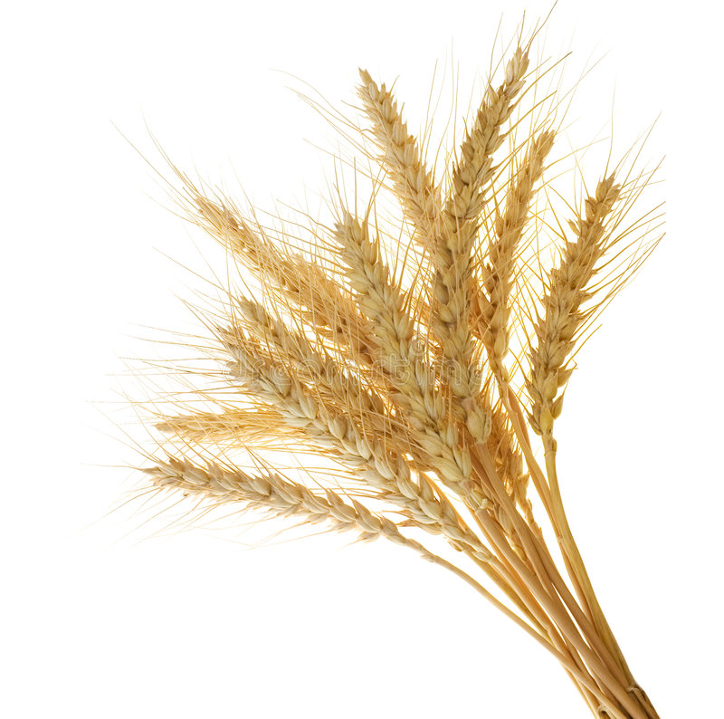 Free Wheat Ears Royalty Free Stock Photography - 3065177