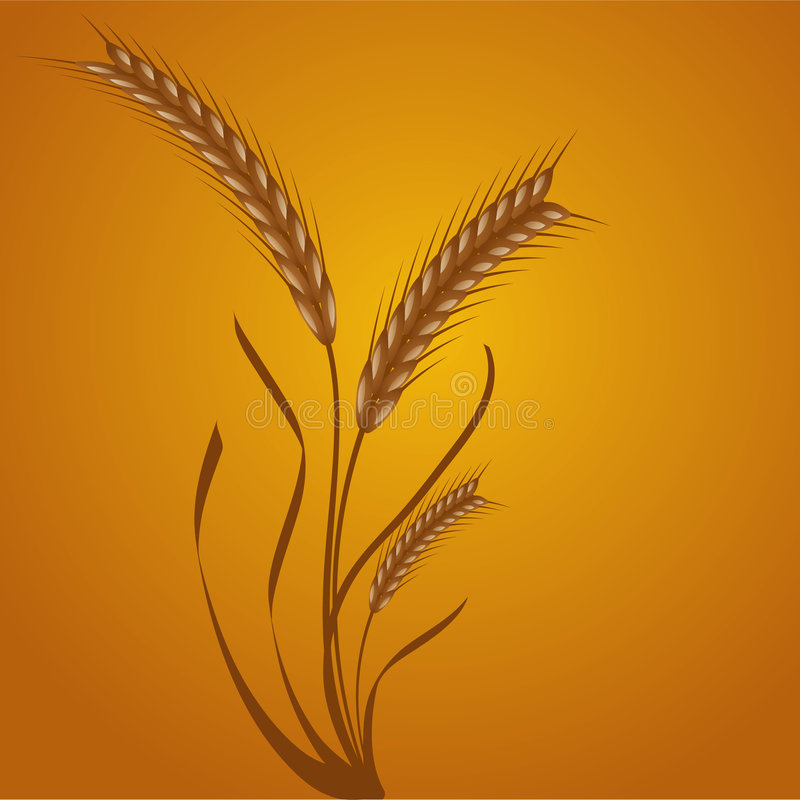Download Wheat ears stock vector. Illustration of design, ears - 6794531
