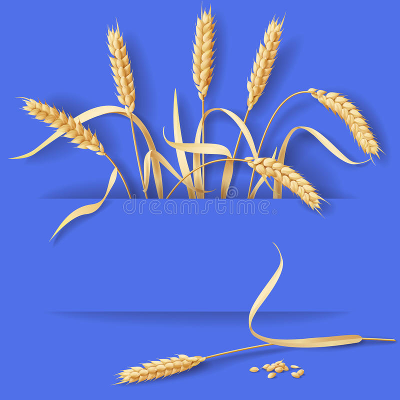Wheat Ears on Blue royalty free illustration