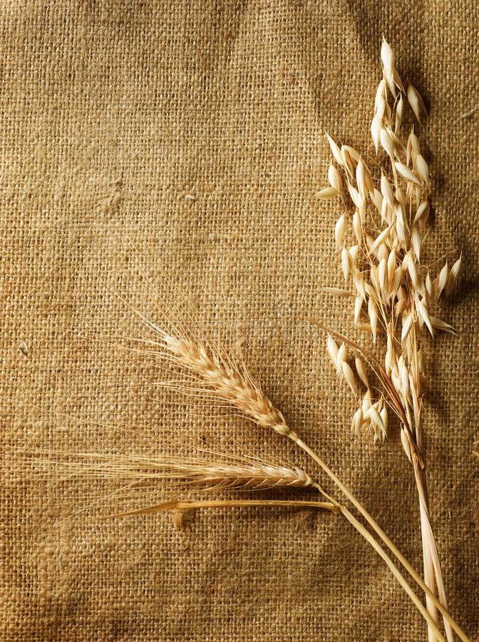 Download Wheat Ears border stock photo. Image of canvas, brown - 15966658