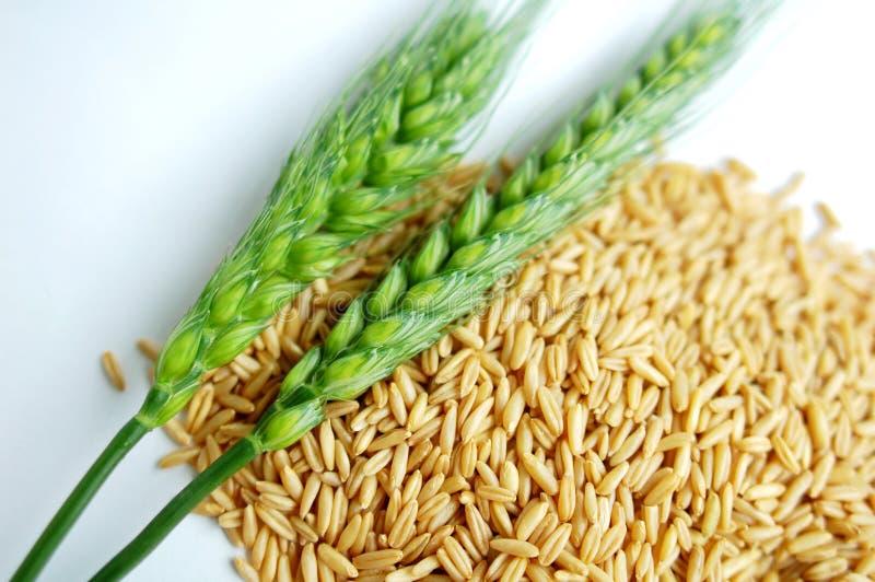 Wheat ears and grain stock photo