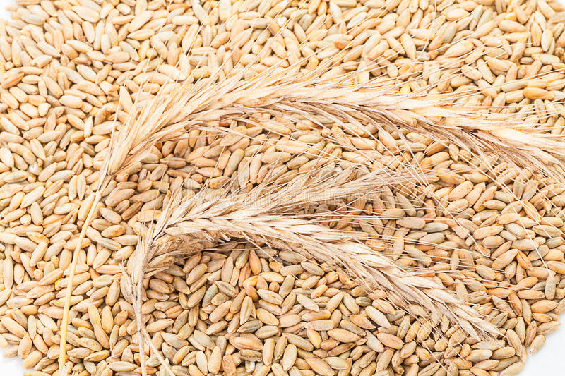 Wheat Ears And Grain Royalty Free Stock Photo