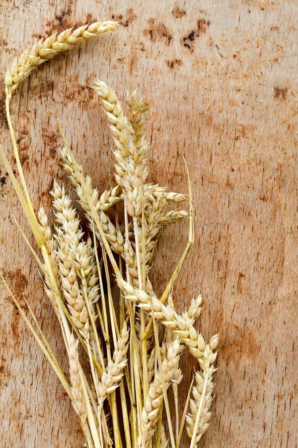 Wheat ears and grain stock image