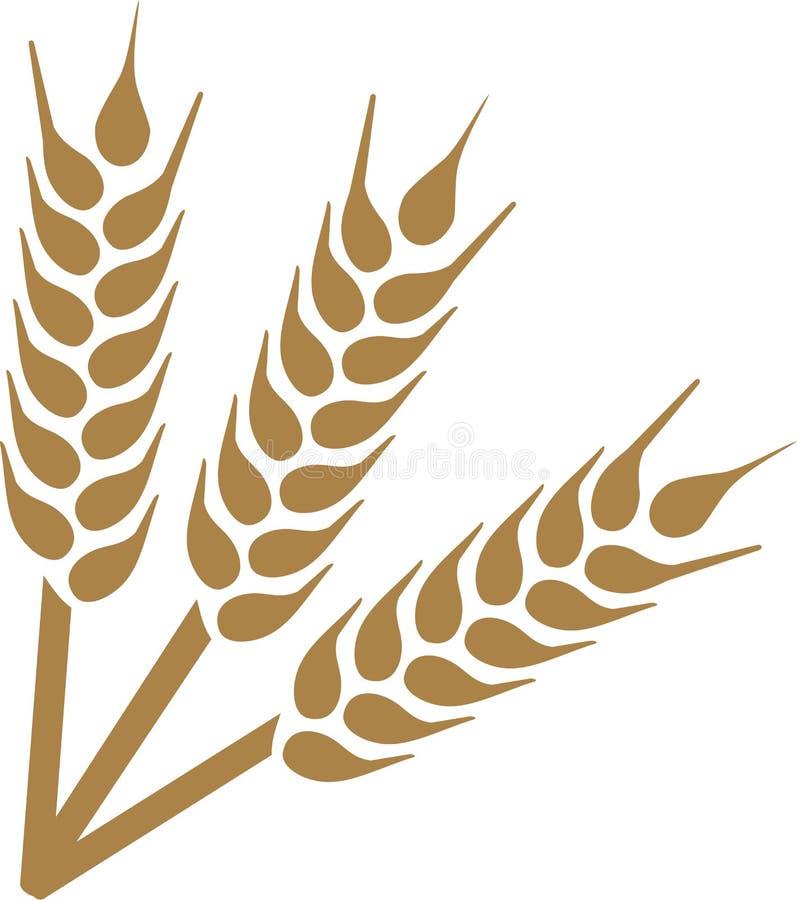 Wheat ears harvest. Grain seed vector illustration