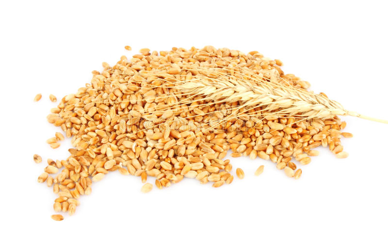 Download Wheat ears hill stock photo. Image of healthy, yellow - 22890540