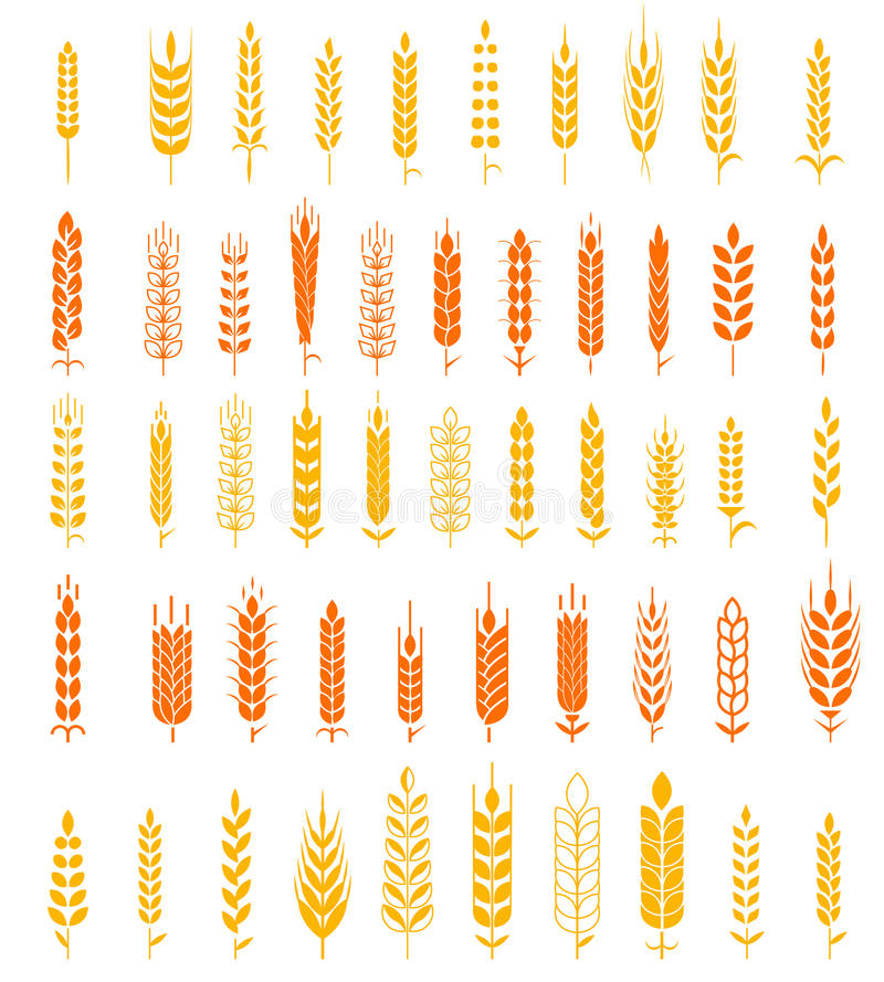 Wheat Ears Icons and Logo Set Natural Product Company and Farm Company Organic wheat, bread agriculture and natural eat. Set of simple and stylish Wheat Ears