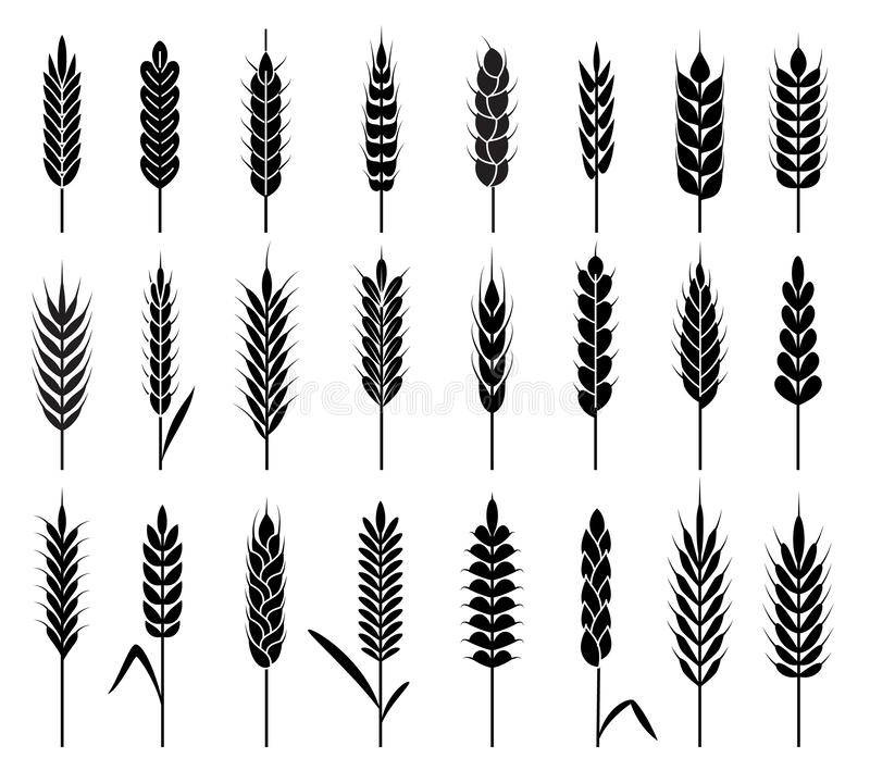 Wheat ears icons. Organic agriculture cereals harvest. Stalk grain rice and wheat, corn and oats, barley natural product. Vector rye seed line harvesting logos vector illustration