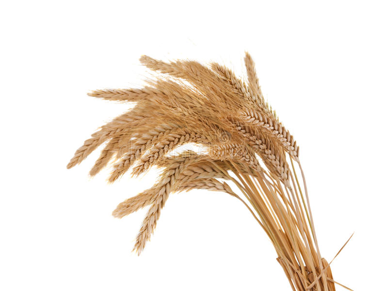 Download Wheat ears isolated stock photo. Image of golden, background - 27103616