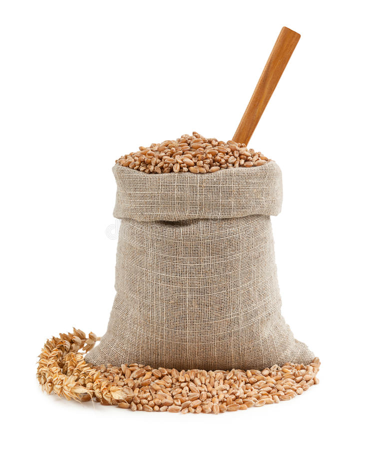 Wheat and ears isolated on white background stock image