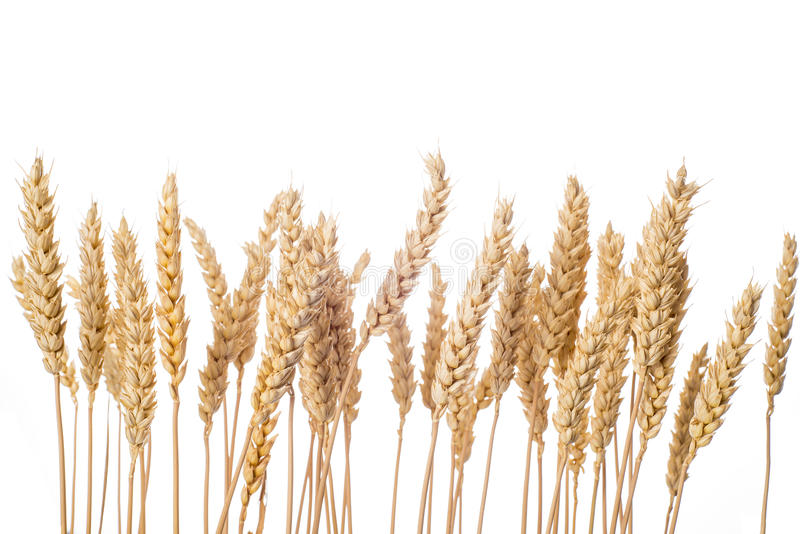 Wheat ears isolated on a white background stock photography