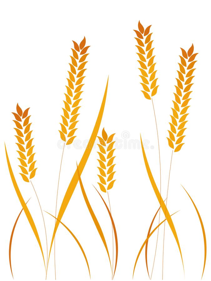 Wheat ears or rice icons set. Agricultural symbols isolated on white background. stock image