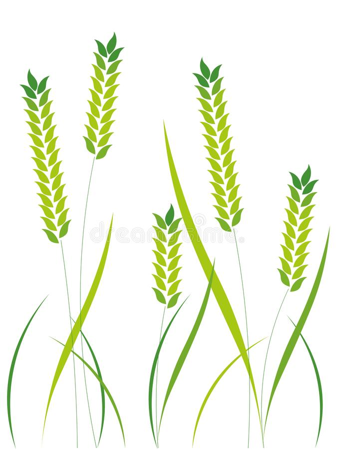 Wheat ears or rice icons set. Agricultural symbols isolated on white background. stock images