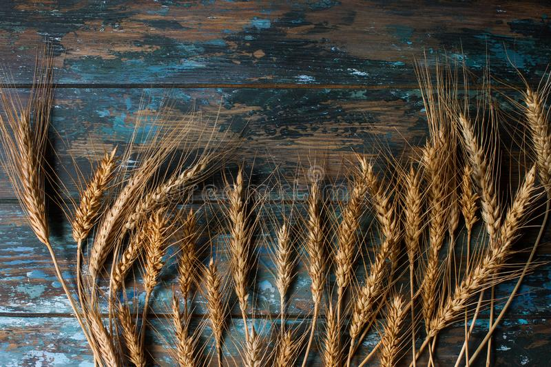 Wheat ears on rustic blue wooden background with space for text royalty free stock images