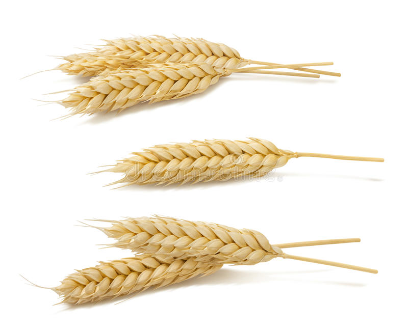 Wheat ears set 2 isolated on white background. As package design element royalty free stock photo