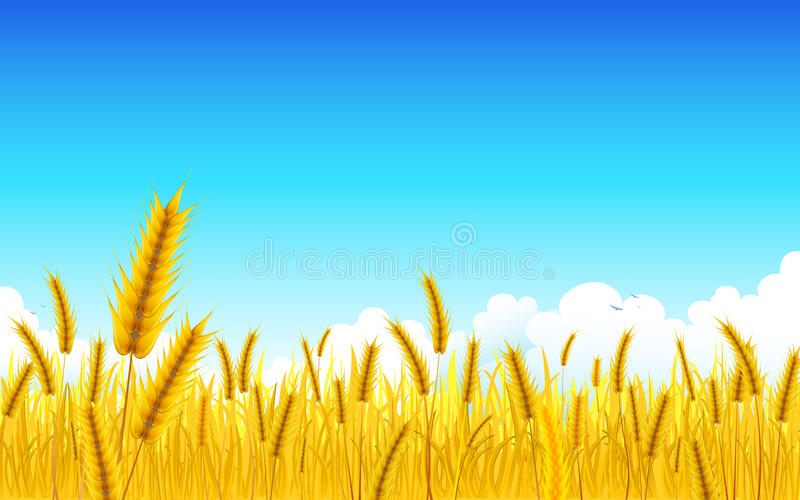 Wheat Farm Royalty Free Stock Photography