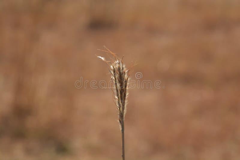 Wheat farm stock photography